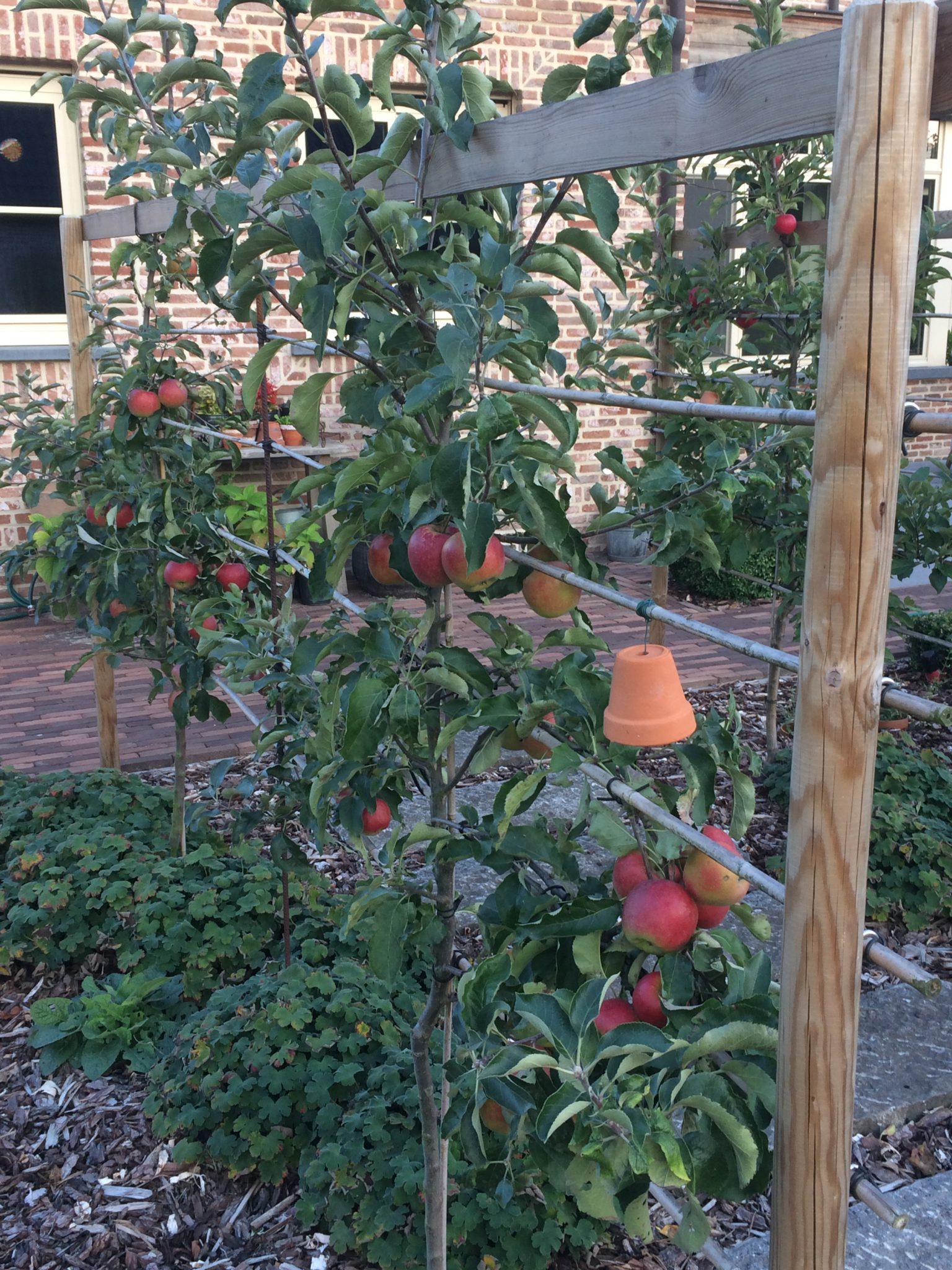 project 11 een landelijke tuin om van te snoepen 6